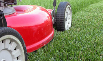 Lawn Care in Minneapolis MN Lawn Care Services in Minneapolis MN Quality Lawn Care in Minneapolis MN