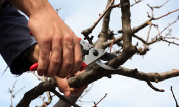 Tree Pruning in Minneapolis MN Tree Pruning Services in Minneapolis MN Quality Tree Pruning in Minneapolis MN