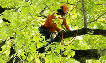 Tree Trimming in Minneapolis MN Tree Trimming Services in Minneapolis MN Tree Trimming Professionals in Minneapolis MN Tree Services in Minneapolis MN Tree Trimming Estimates in Minneapolis MN Tree Trimming Quotes in Minneapolis MN