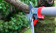 Tree Pruning Services in Minneapolis MN