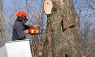 Tree Removal in Minneapolis MN